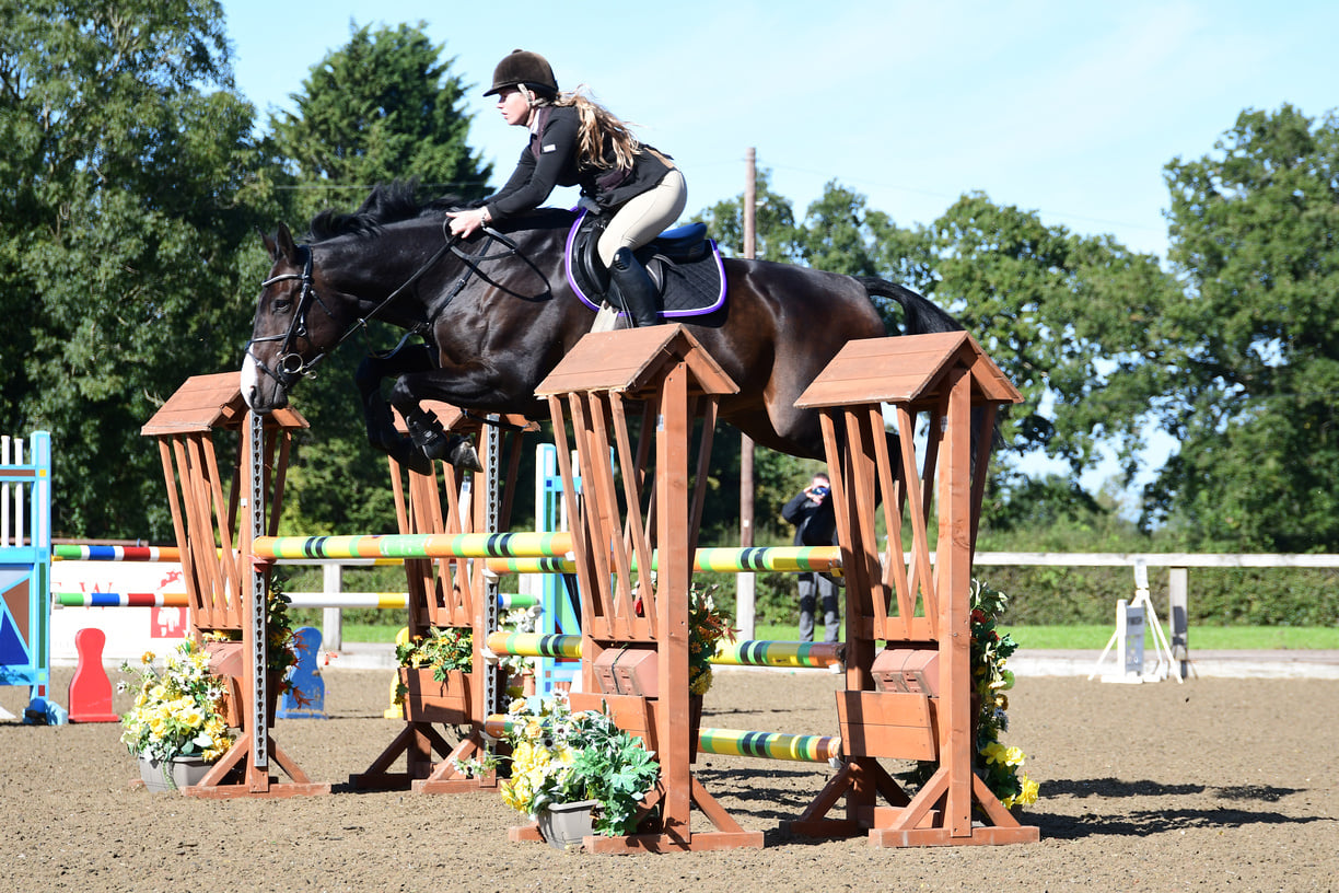 Jumping Horses For Sale UK