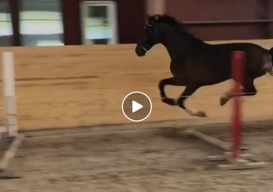 Showjumper With Its Own Style and Technique!