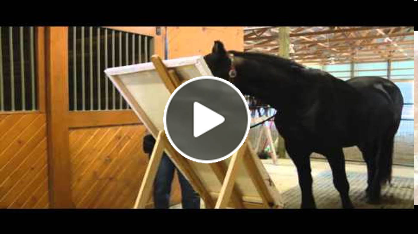Justin The Friesian Horse Who Paints