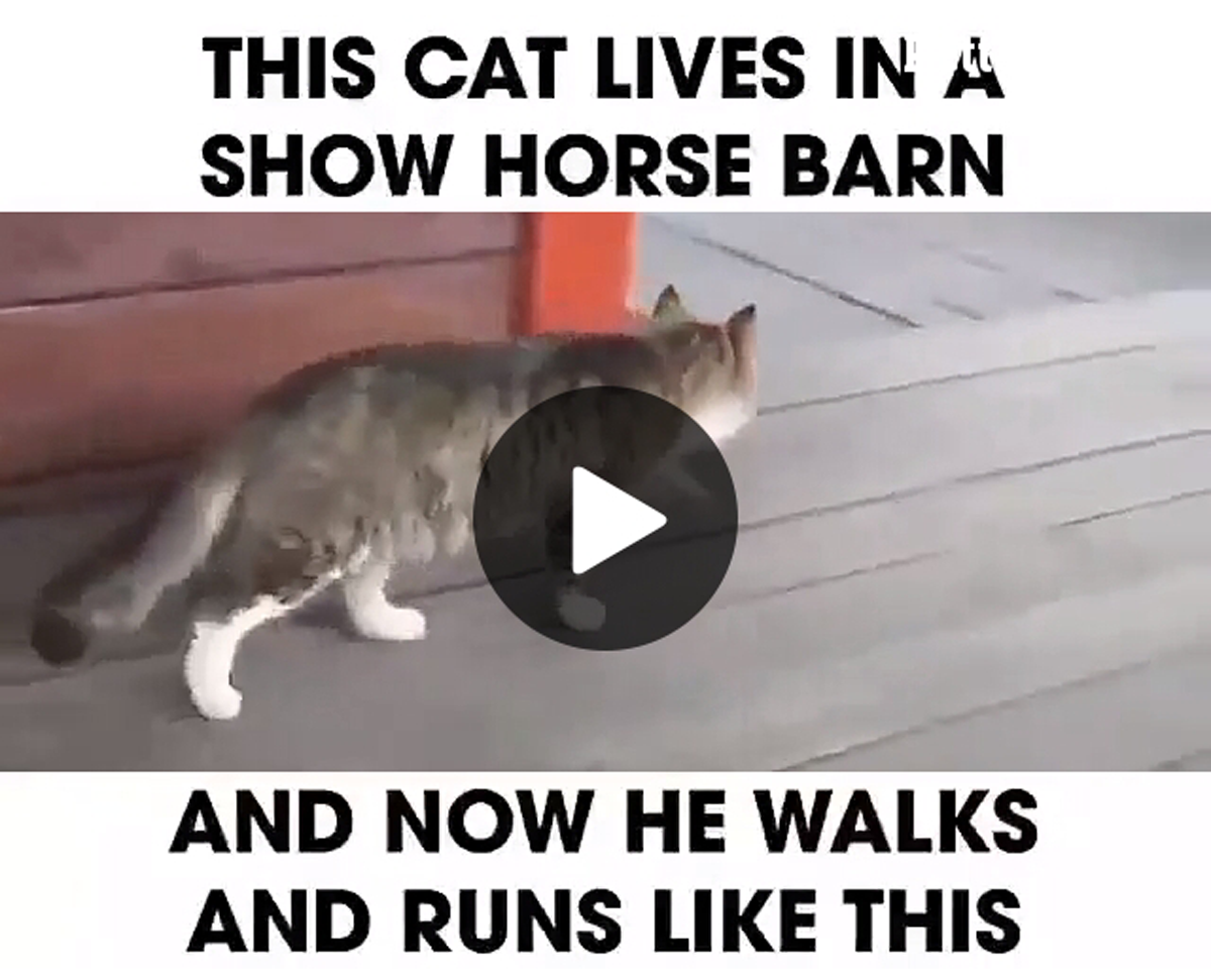 Kitty Dressage