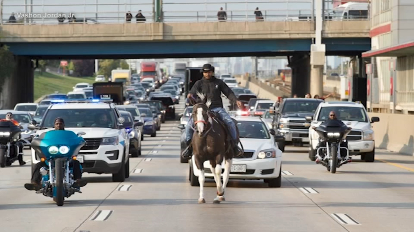 Man On Horse Stops Traffic On Dan Ryan Expressway