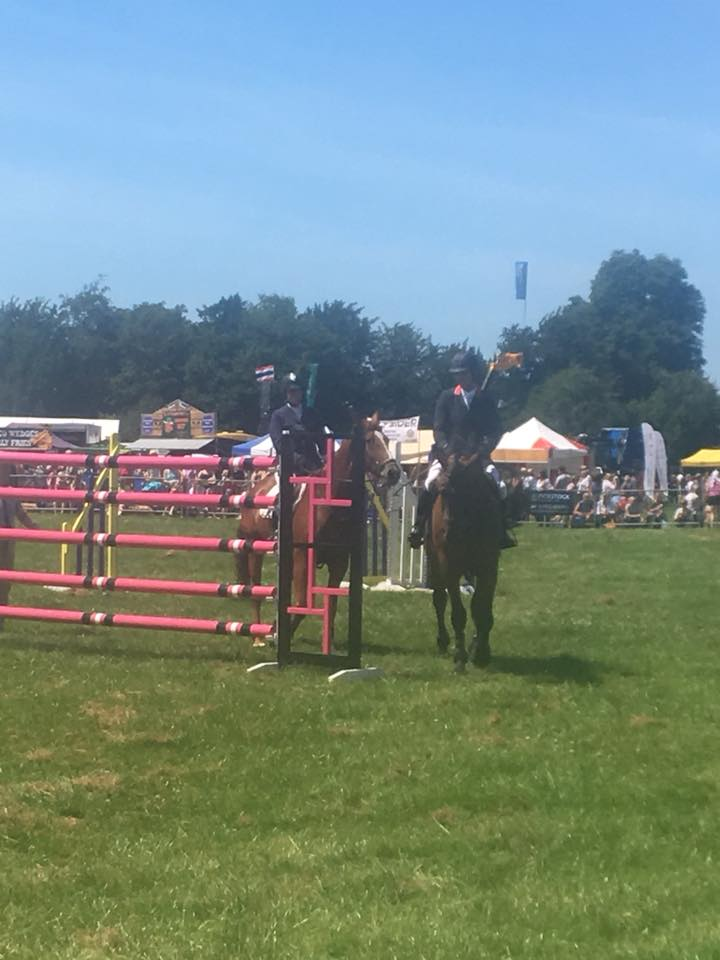 Mark Edwards Showjumper