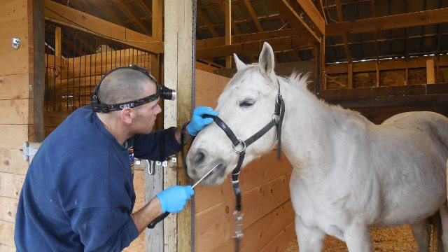 McCarthy Equine Dentistry