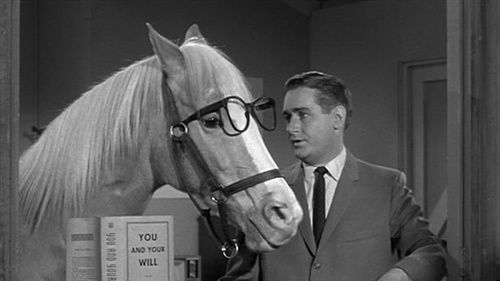 Mister Ed - The Talking Horse