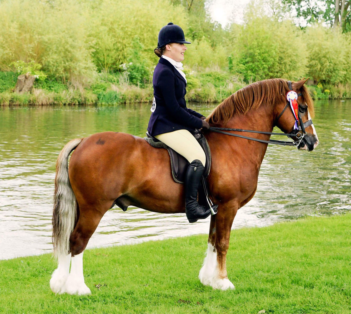 Mountain and Moorland Pony Showing