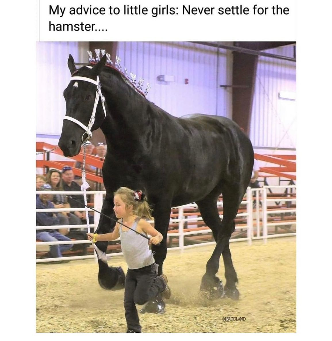 Equine Life - Never Settle For The Hamster