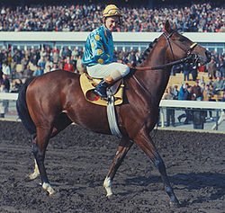 Northern Dancer Race Horse