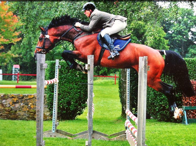 Outcast Showjumping Stallion