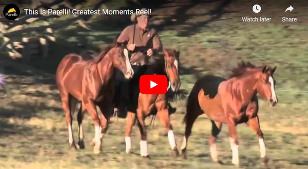 Parelli Horse Training