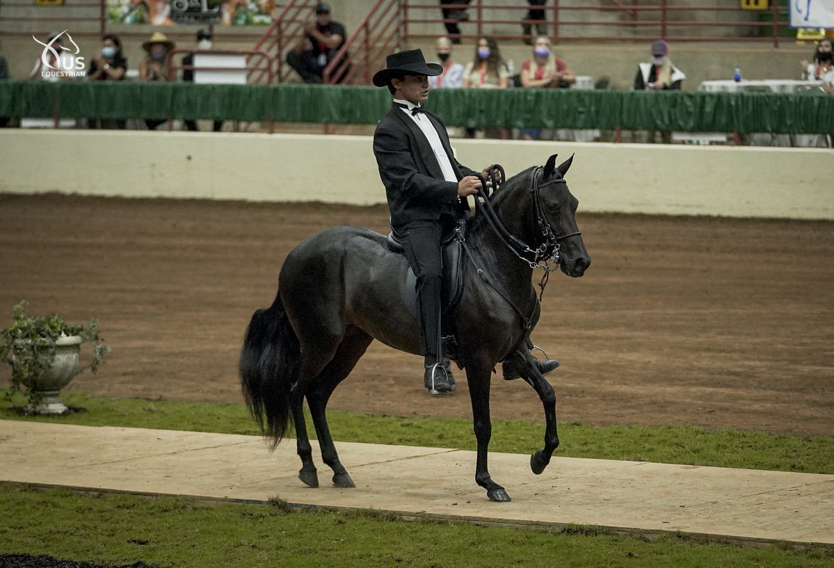Paso Horses