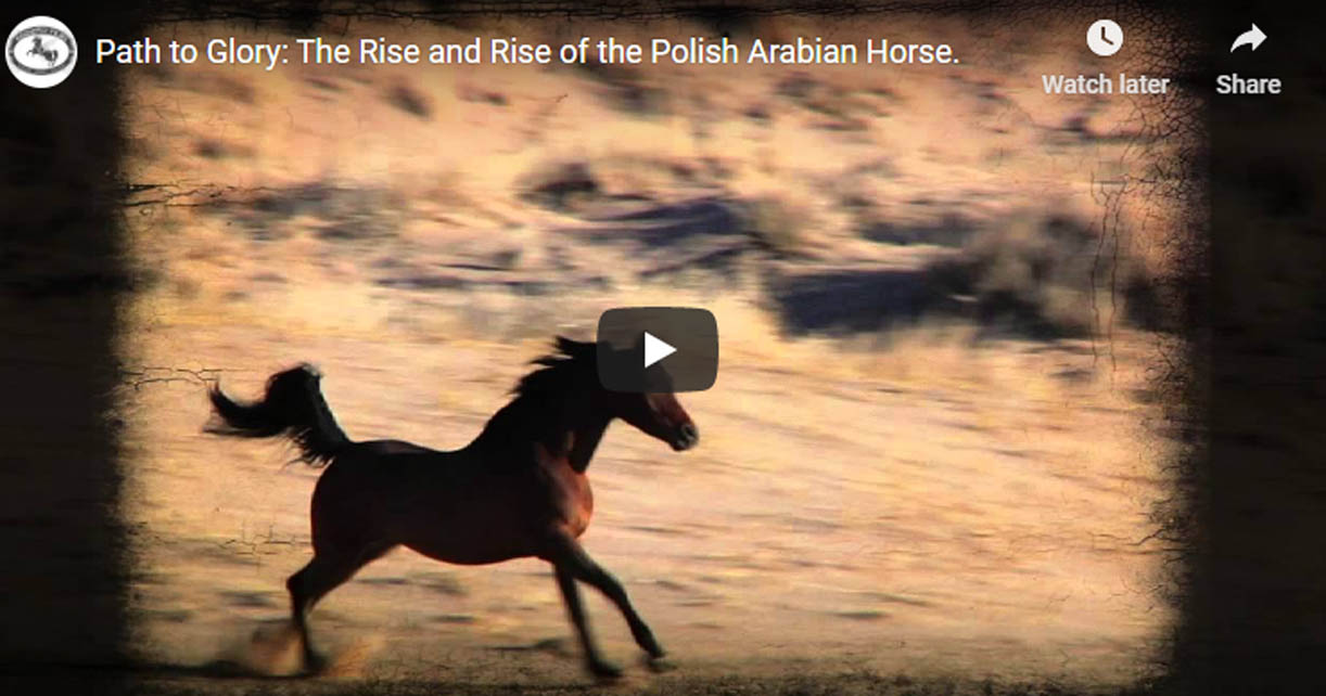 Polish Arabian Horse - Path to Glory- The Rise of the Polish Arabian Horse