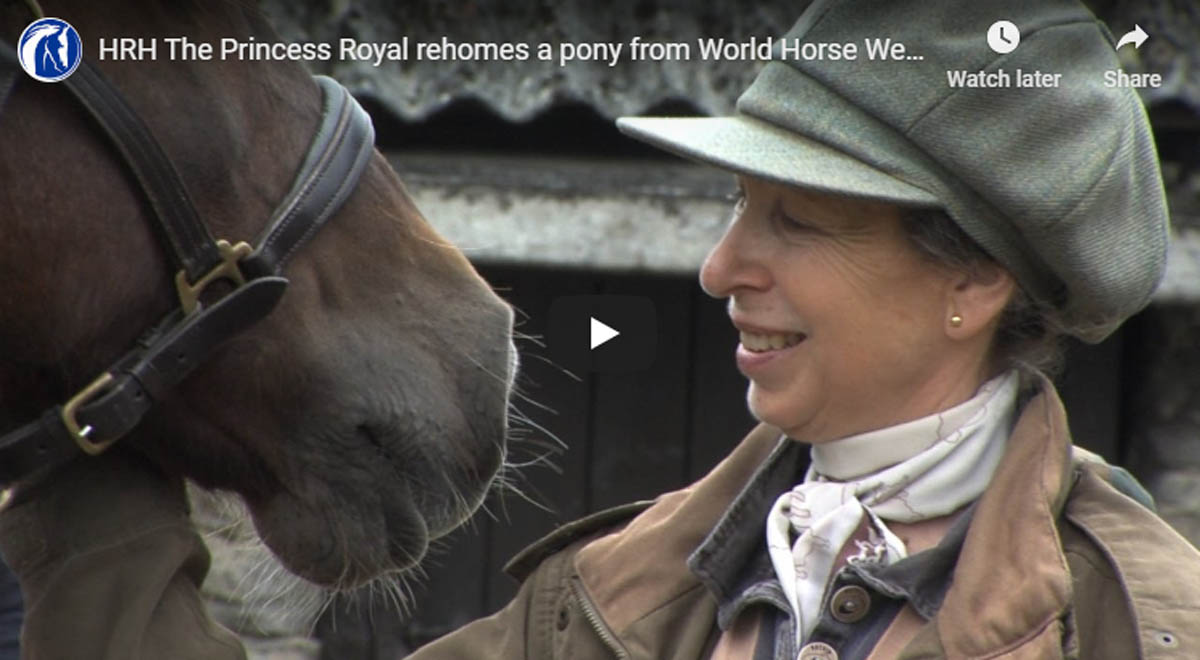 HRH The Princess Royal rehomes a pony from World Horse Welfare