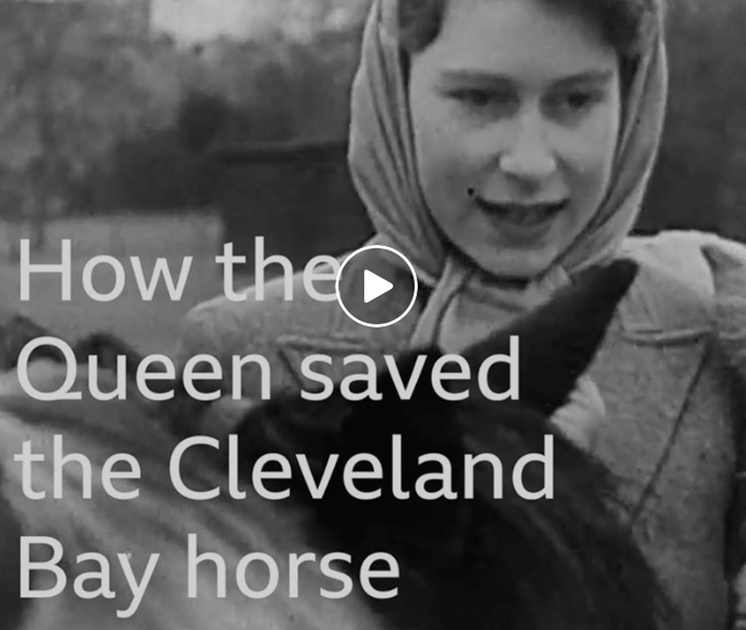 How the Queen saved the Cleveland Bay horse