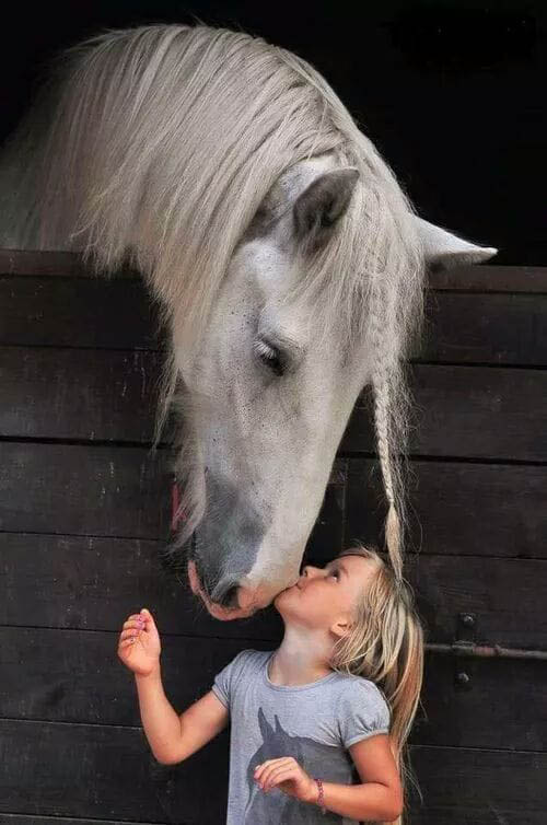 Reach Out to Horses- Children and Horses