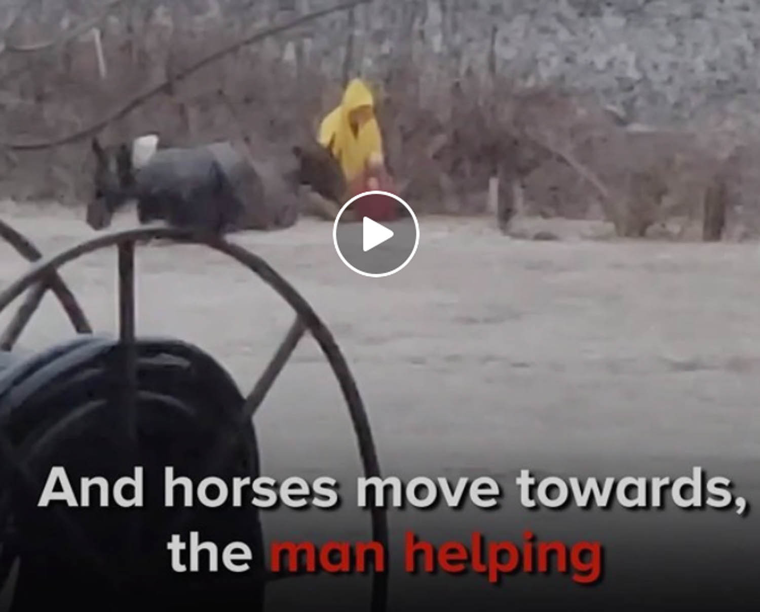 Rescued Carriage Horses Look SO Happy and Healthy Now