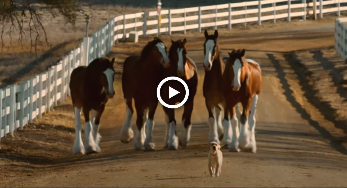 Budweiser Release New Clydesdale Commercial To Celebrate Bars Re-Opening