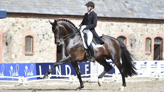 Revolution Dressage Stallion