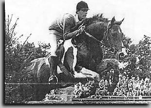 Samber - Dutch Warmblood Coloured Stallion