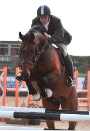 Show Jumper Horses For Sale