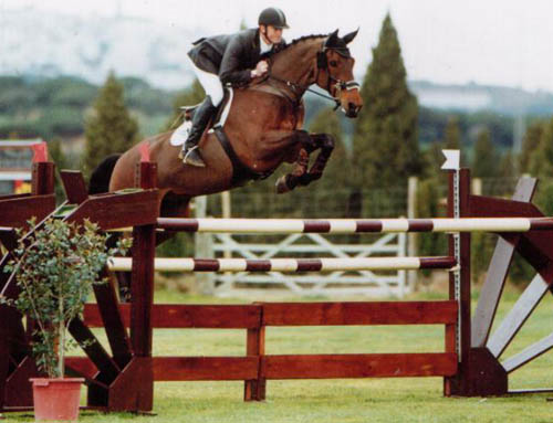 Show Jumpers For Sale UK
