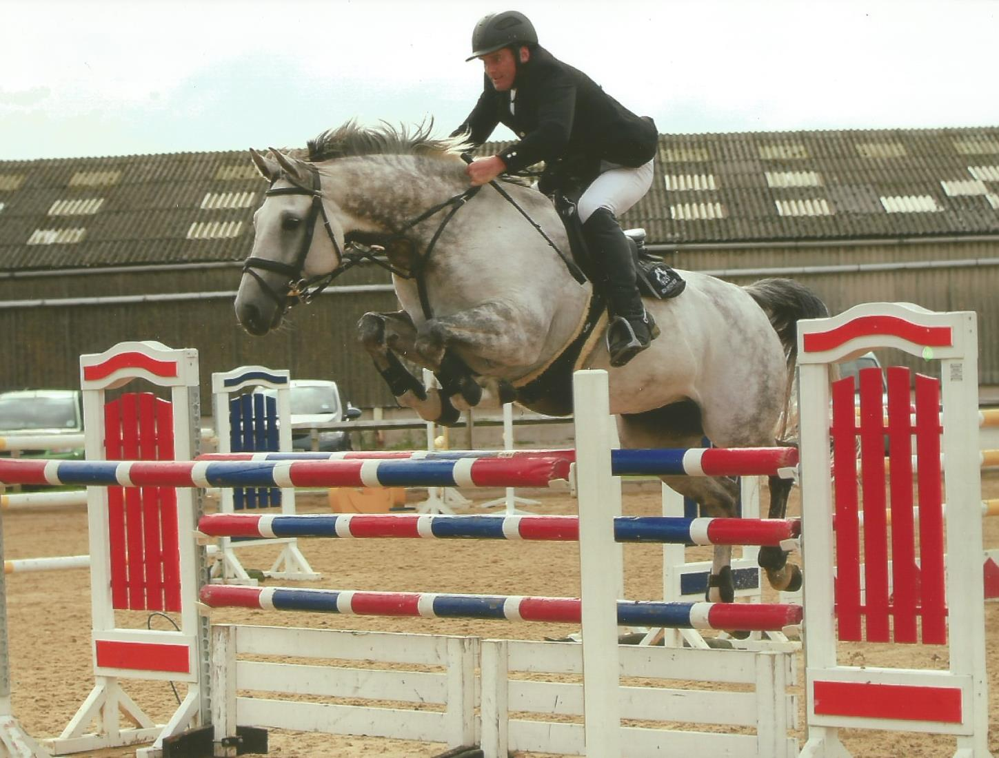 Show Jumpers For Sale