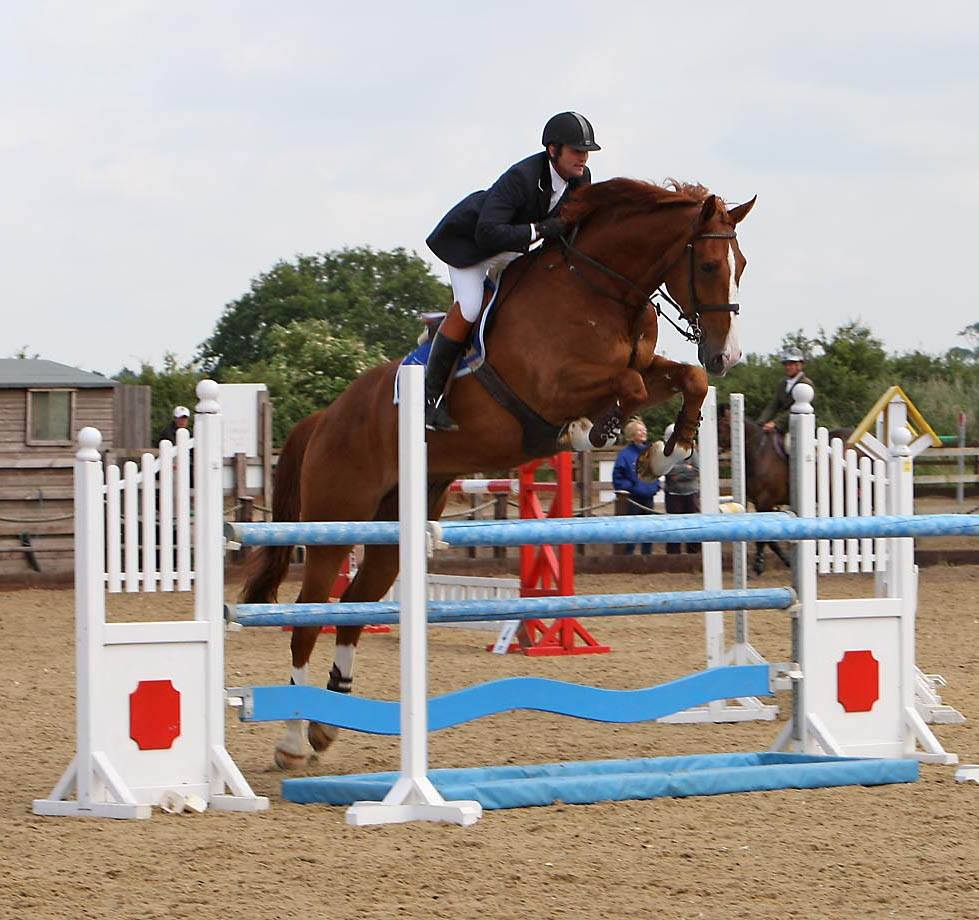 Showjump Horses For Sale