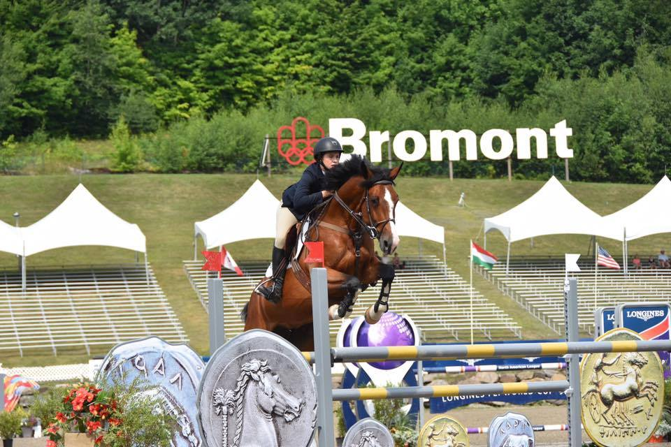 Showjumpers For Sale Ireland