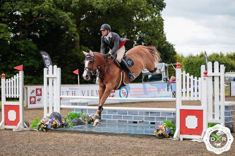 Showjumpers For Sale UK