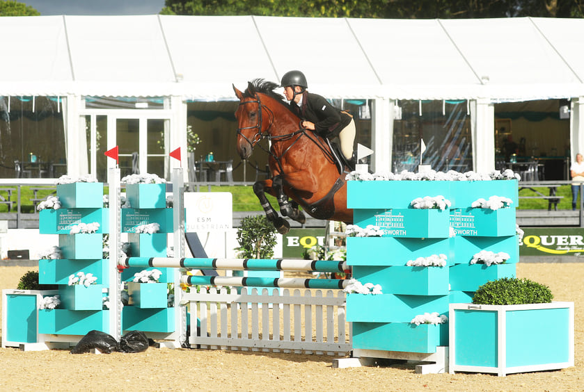 Showjumping Horse For Sale