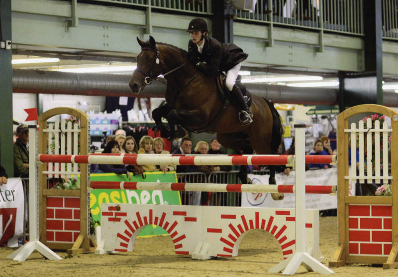 Showjumping Horses For Sale