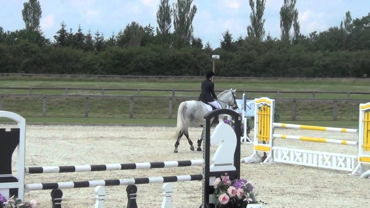 Horse Jumping Videos