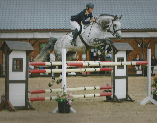 Show Jumping Horses For Sale / Showjumpers For Sale