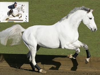 Coloured Stallions