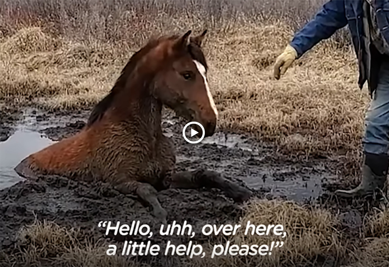 Wild Horse Stuck in the Mud Asks Kind Strangers For Help
