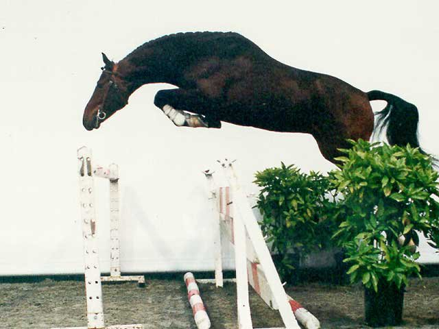 Swiss Warmblood