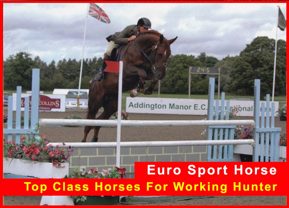 Top Class Horses For Working Hunter