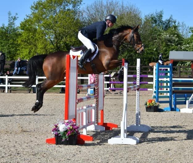 Top Show Jumping Horses For Sale