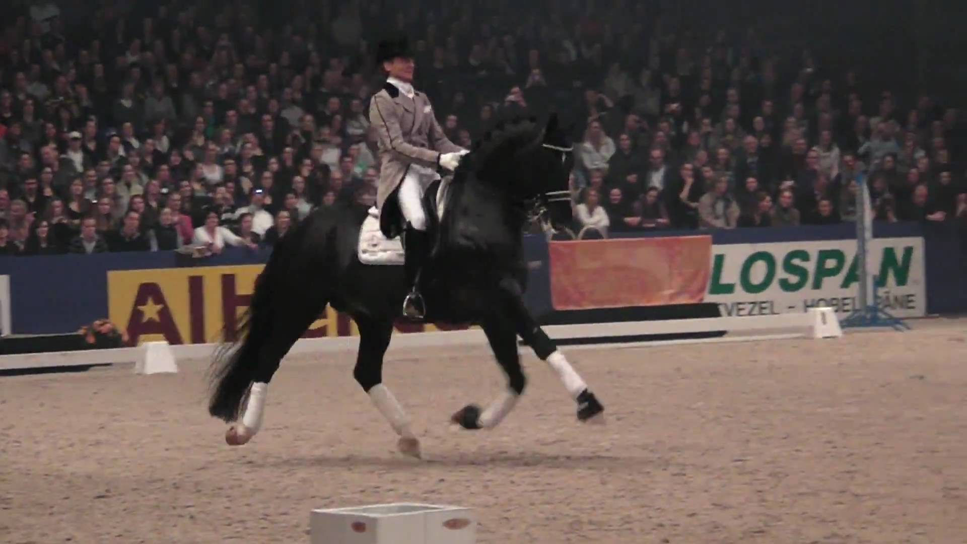 Totilas - Dressage Stallion