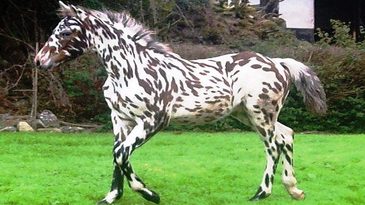 Unreal Horses
