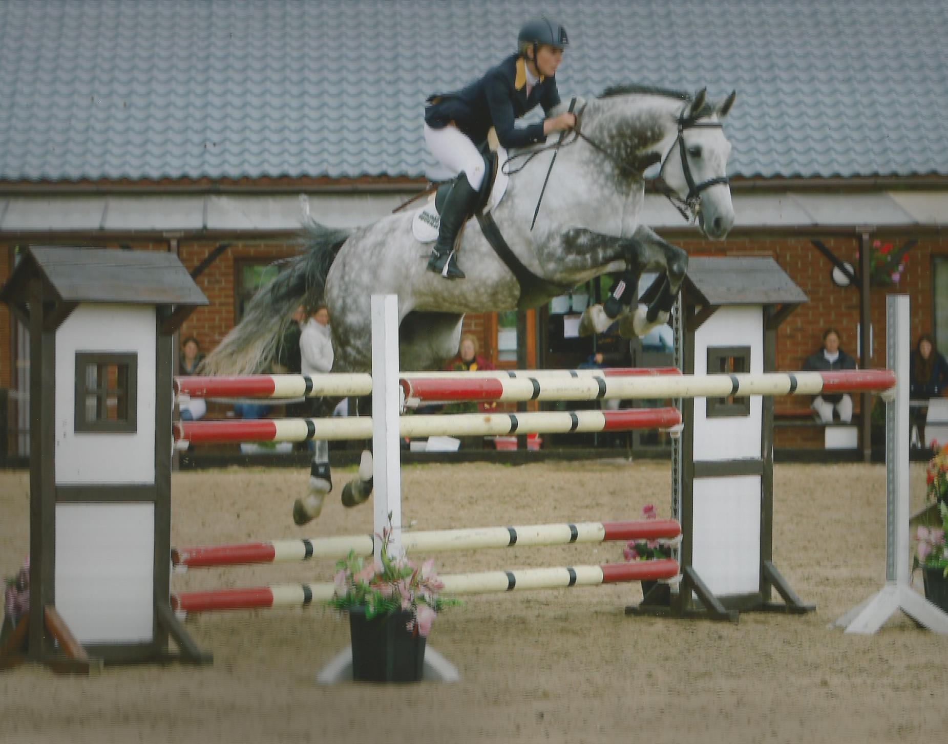 Polish Warmblood For Sale