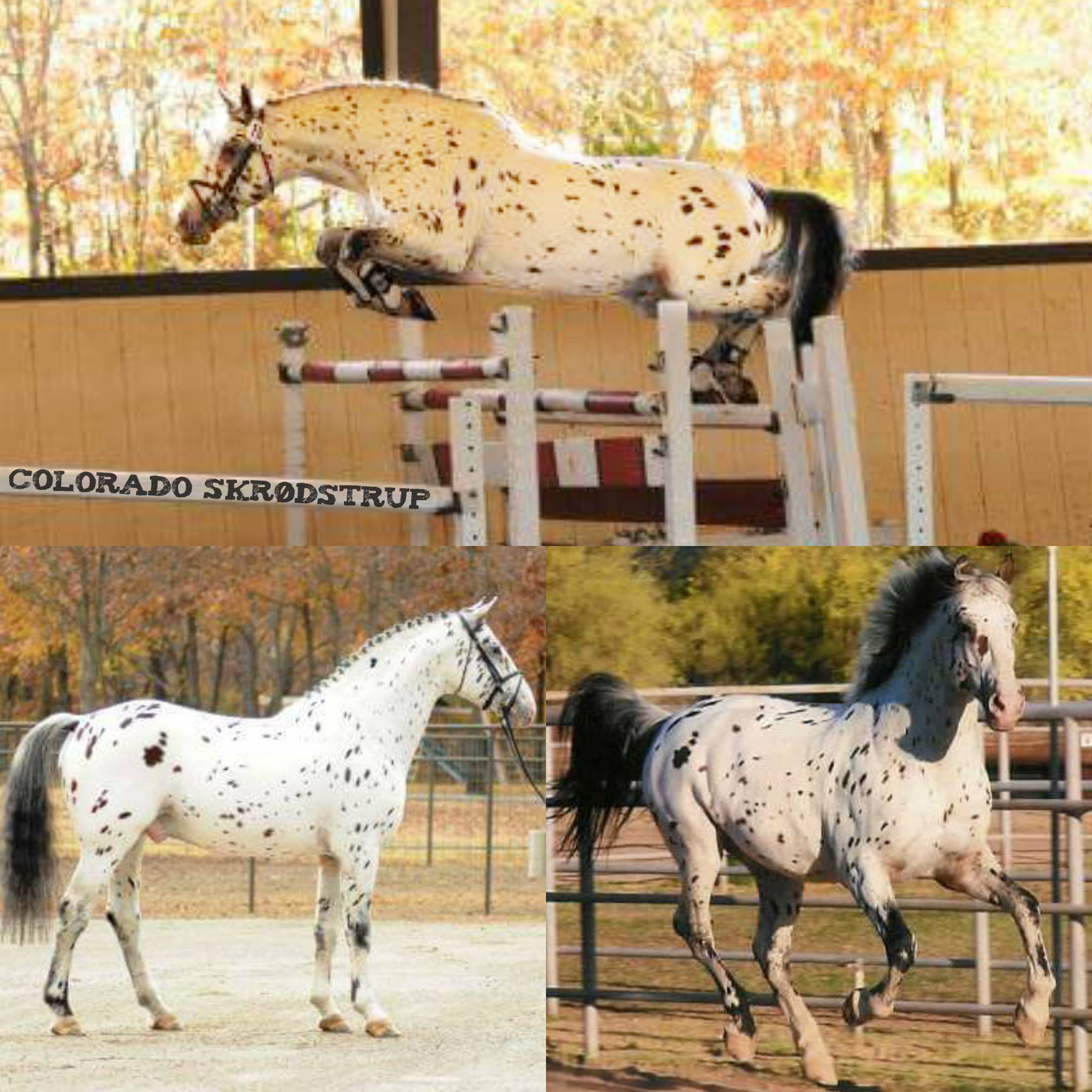What Are Spotted Horses Called