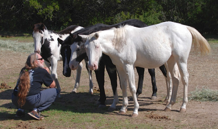 Willie Nelson Rescued 70 Horses From The Slaughterhouse