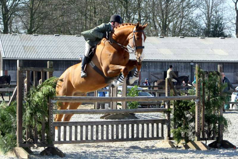 Show Horse For Sale - Working Hunter