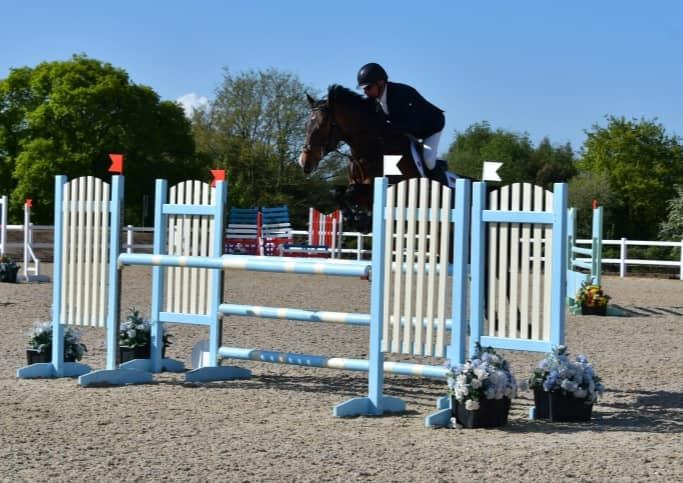 Young Jumping Horses For Sale