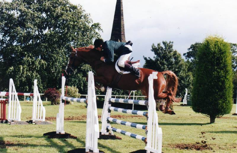 Young Showjumpers For Sale
