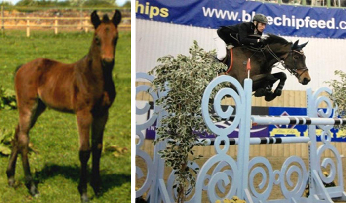 Yearling Warmblood Horses For Sale