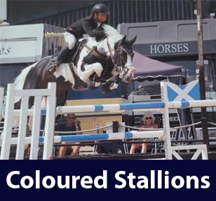 Coloured Stallions At Stud