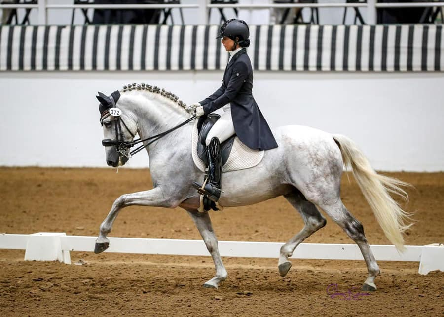 andalusian Horses For Sale in california