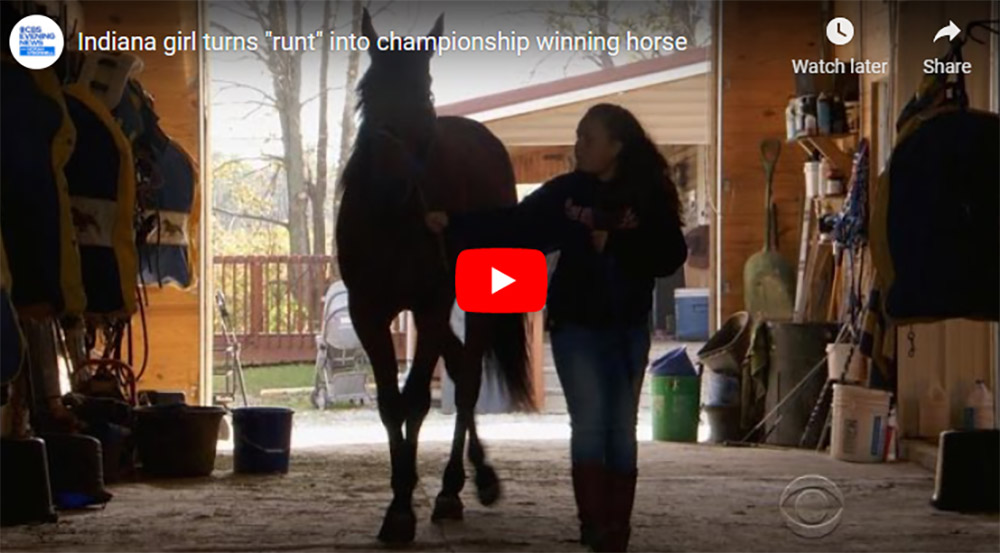 Amazing story of a little horse with no pedigree and the faith of a little girl!