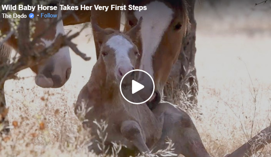 Wild Horse Family Helps Baby Take First Steps